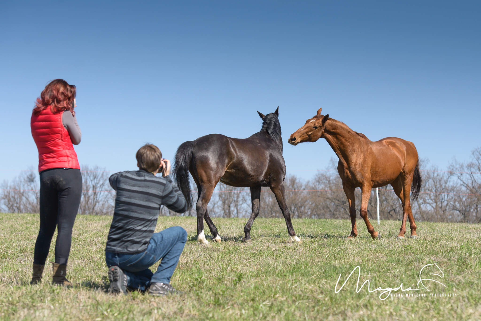 Behind The Scene Stories Horse Photography Workshop At